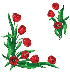 red tulip corner vector image