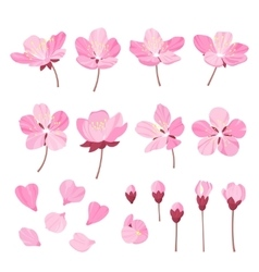 set of beautiful cherry tree flowers isolated vector image