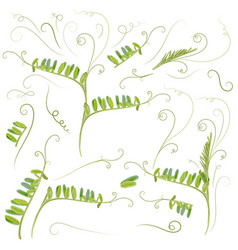 Set plant leaves in green color mouse peas vector