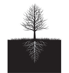 shape naked tree and roots outline vector image