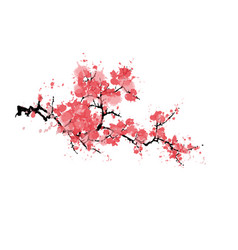 abstract sakura blossom isolated on white vector image