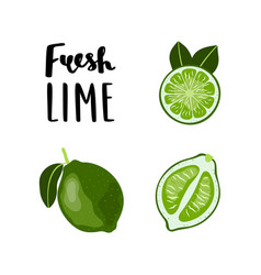 bright flat style lime fruit with lettering vector image