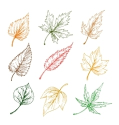 Leaves trees sketch icons vector