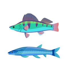 mackerel blue fish marine set vector image