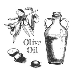 olive oil and fruitage composition vector image
