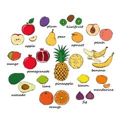 Set of color fruit doodles vector