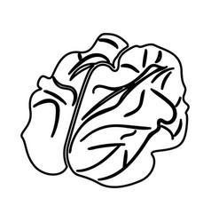 Walnut black color icon vector