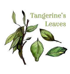 watercolor leaves set hand drawn set vector image