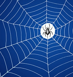 spider and net vector image