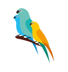 canary and parrots birds on branch vector image
