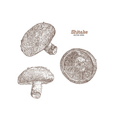 Collection of shiitake mushroom and a bit of vector