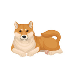 Detailed flat icon of shiba inu lying on vector