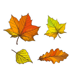 fall fallen autumnal leaves isolated icons vector image