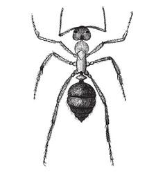 Slave ant vintage vector