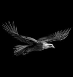 soaring bald eagle win vector image