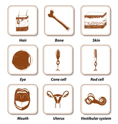 Human anatomy icon set vector image vector image
