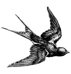 Swallow engraving vector