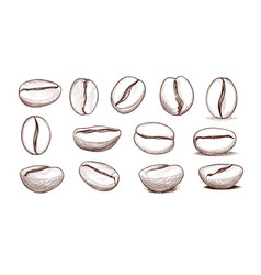 coffee bean icon set hand drawn doodle sketch vector image