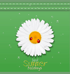 daisy flower chamomile best summer holidays vector image