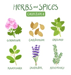 Herbs and spices collection 8 vector image