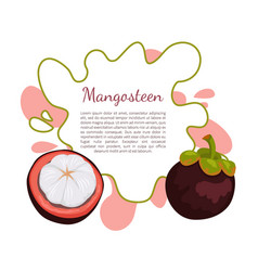 purple mangosteen exotic juicy fruit poster vector image