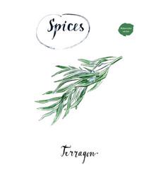 twig of fresh terragon herb in watercolor vector image