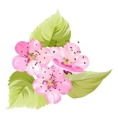 Sakura flowers Spring background vector image vector image