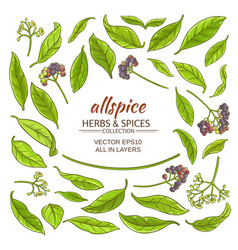 allspice elements set vector image