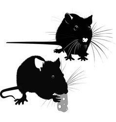 animal rat vector image