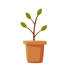 Plant or seedling in clay pot flat style vector