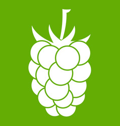 blackberry fruit icon green vector image vector image
