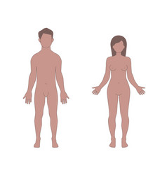 male and female human body shapes vector image