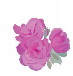 Watercolor pink roses vector