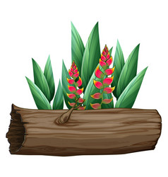 Bird paradise and wooden log on white vector