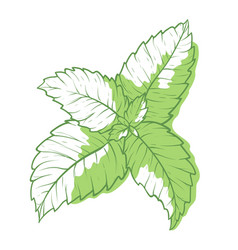 mint icon fragrant melissa green herbal symbol vector image