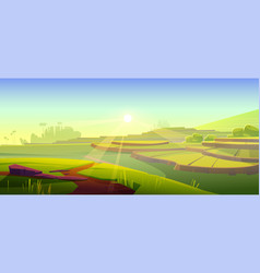 Rice field terraces green paddy at morning vector