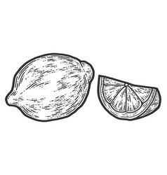 Set whole lemon and slice sketch scratch board vector