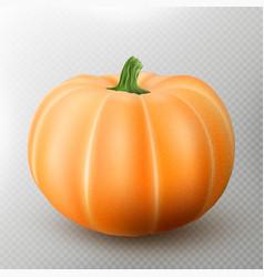 Realistic macro orange pumpkin isolated on vector