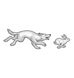 wolf chasing hare sketch vector image