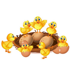many chicks and eggs in nest vector image vector image