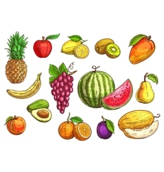 Hand drawn sketch of tropical and exotic fruits vector