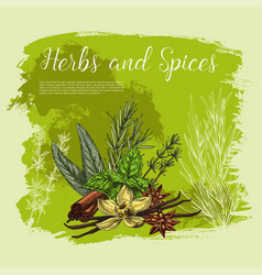 Poster of spices and herbal seasonings vector