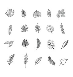 tropic leaves sketch set vector image