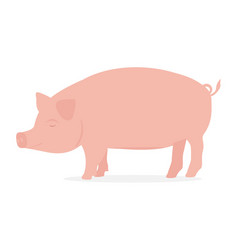farm animal pig vector image