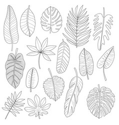 leaves tropical plants black outline set vector image
