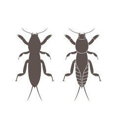 Mole cricket vector