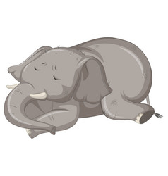 sick elephant on white background vector image