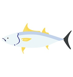 Sea fish tuna vector image vector image