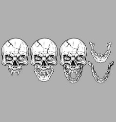 Detailed graphic white human skulls and jaws set vector