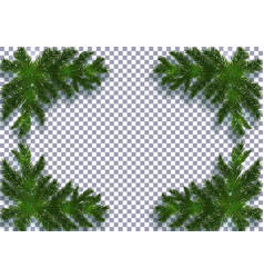 Four blue realistic fir branches with shadow vector
